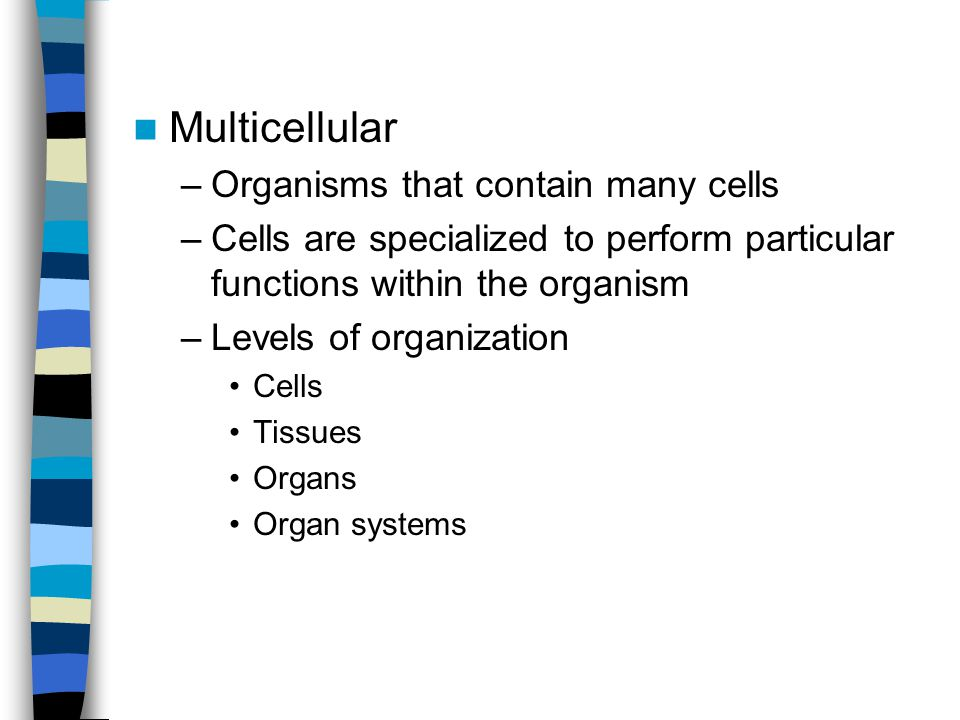 Multicellular –Organisms that contain many cells –Cells are specialized to perform particular functions within the organism –Levels of organization Ce