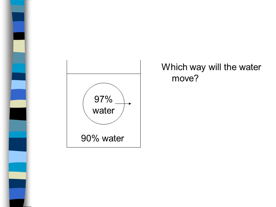 This solution is hypertonic - water diffuses out of the cell 95% water 90% water 95% water 98% water This solution is hypotonic - water diffuses into the cell