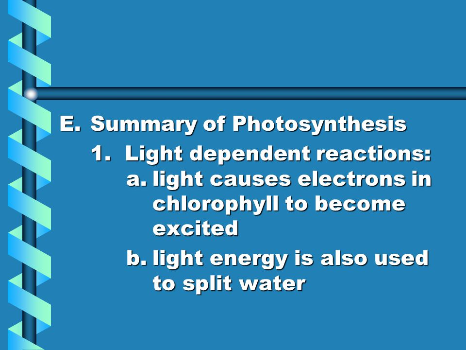 E.Summary of Photosynthesis 1. Light dependent reactions: a.light causes electrons in chlorophyll to become excited b.light energy is also used to spl