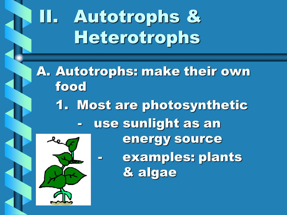 II.Autotrophs & Heterotrophs A.Autotrophs: make their own food 1. Most are photosynthetic -use sunlight as an energy source -use sunlight as an energy