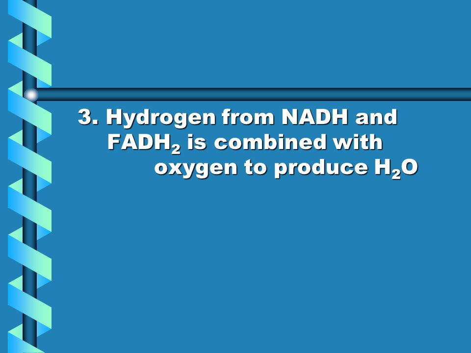 3. Hydrogen from NADH and FADH 2 is combined with oxygen to produce H 2 O