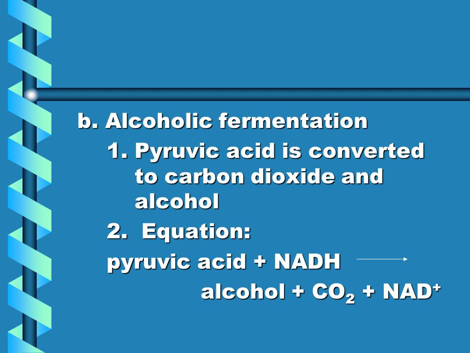 b. Alcoholic fermentation 1. Pyruvic acid is converted to carbon dioxide and alcohol 2. Equation: pyruvic acid + NADH alcohol + CO 2 + NAD +