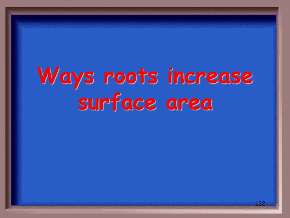 121 What are ways monocots adapt if wind pollinated