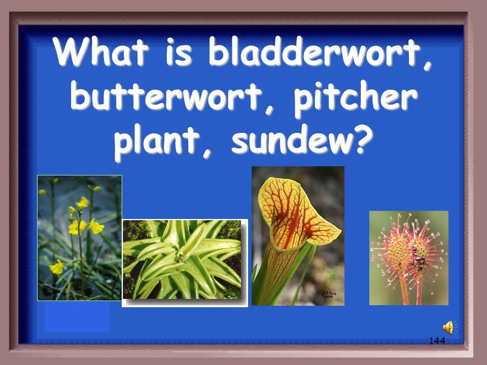 143 Besides a Venus Fly Trap, Name 1 carnivorous plant