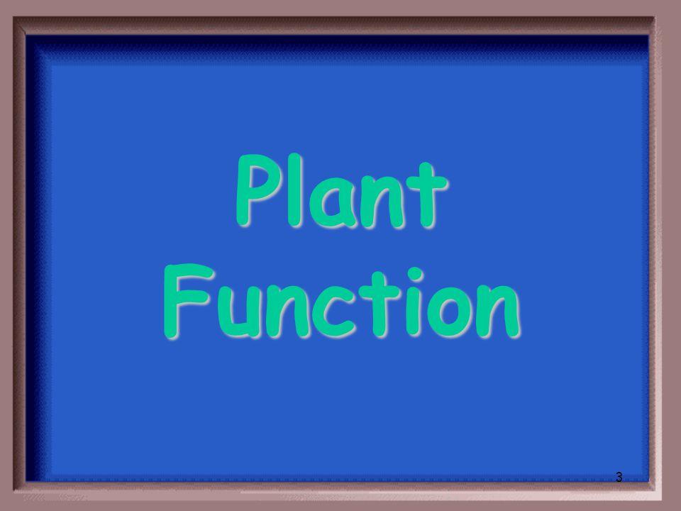 2 Plant Structure