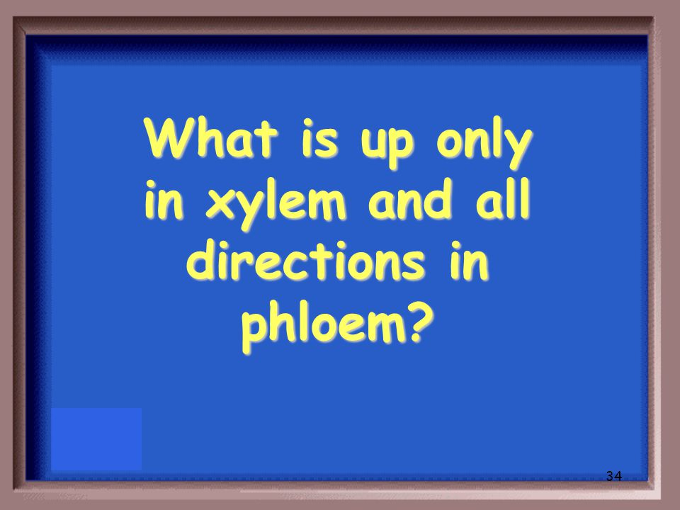 33 How xylem and phloem transport substances (direction)