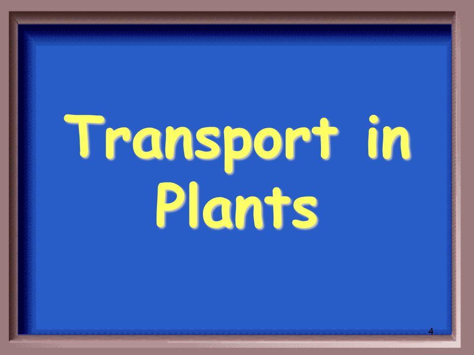 3 Plant Function
