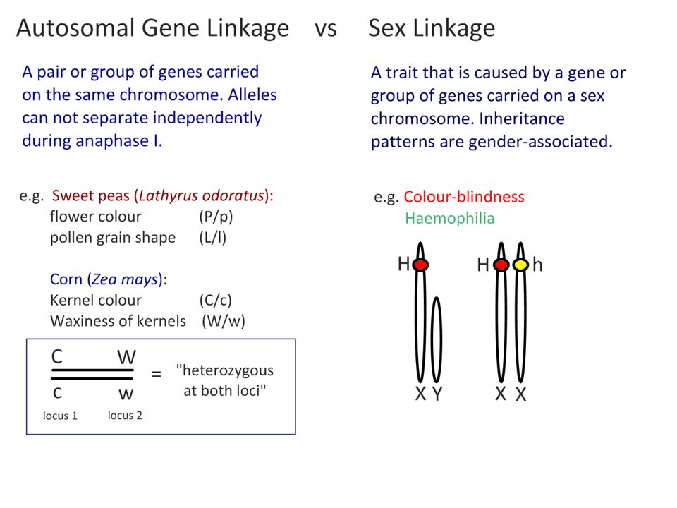 Which organisms in the F 2 generation are recombinants.