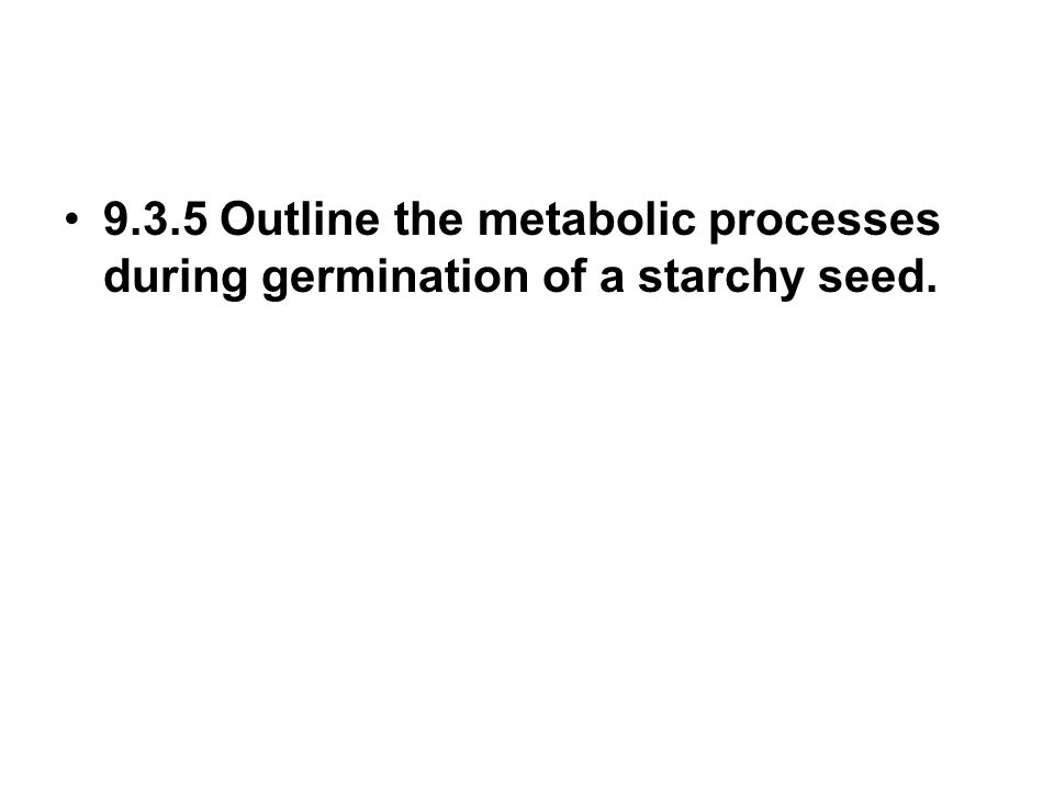 9.3.5 Outline the metabolic processes during germination of a starchy seed.