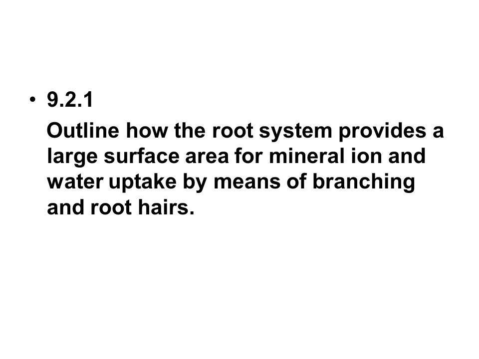 9.2.1 Outline how the root system provides a large surface area for mineral ion and water uptake by means of branching and root hairs.