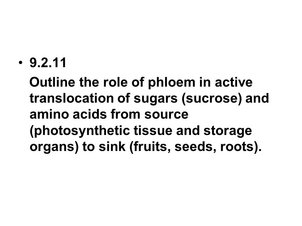9.2.11 Outline the role of phloem in active translocation of sugars (sucrose) and amino acids from source (photosynthetic tissue and storage organs) t