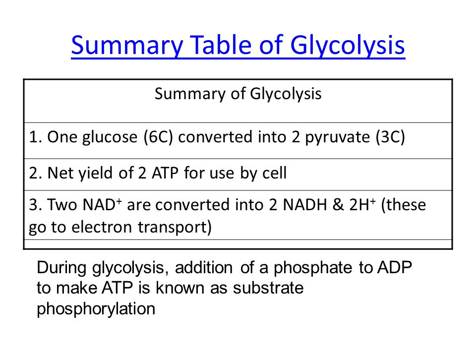 Summary Table of Glycolysis Summary of Glycolysis 1. One glucose (6C) converted into 2 pyruvate (3C) 2. Net yield of 2 ATP for use by cell 3. Two NAD