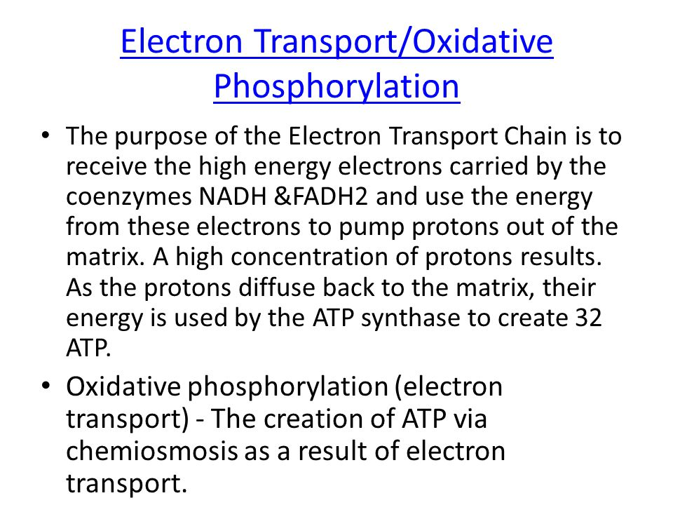 Electron Transport Occurs at cristae (inner membrane) NADH & FADH 2 deliver H + and e- to cristae Electrons transport along cristae through electron acceptors, provide energy to pump H + from matrix to outer compartment Concentration of H + is now higher in outer compartment.