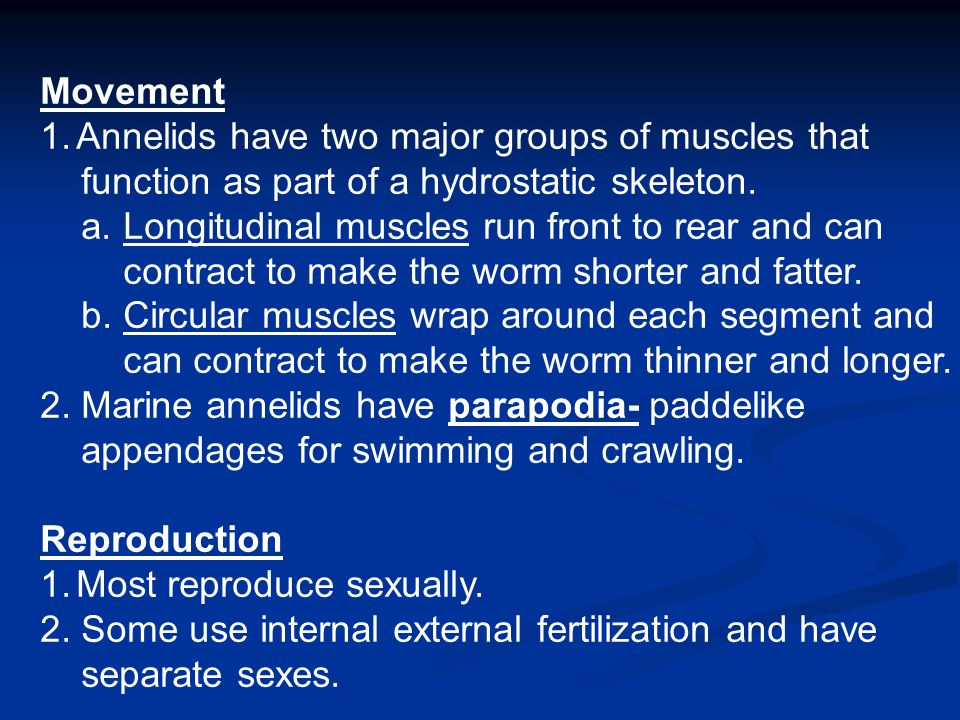 Movement 1.Annelids have two major groups of muscles that function as part of a hydrostatic skeleton. a. Longitudinal muscles run front to rear and ca