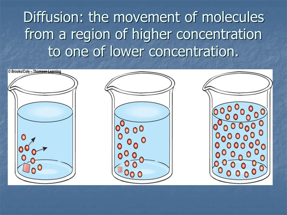 Diffusion: the movement of molecules from a region of higher concentration to one of lower concentration.