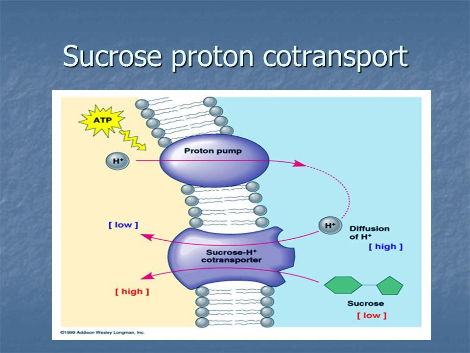 Sucrose proton cotransport