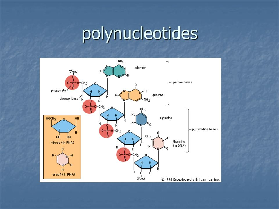 polynucleotides