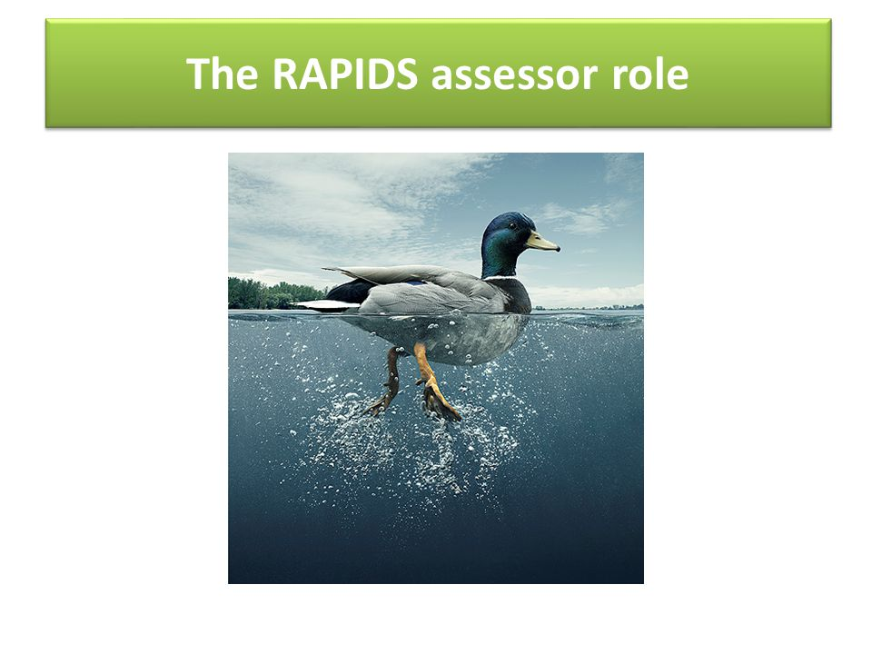 The RAPIDS assessor role