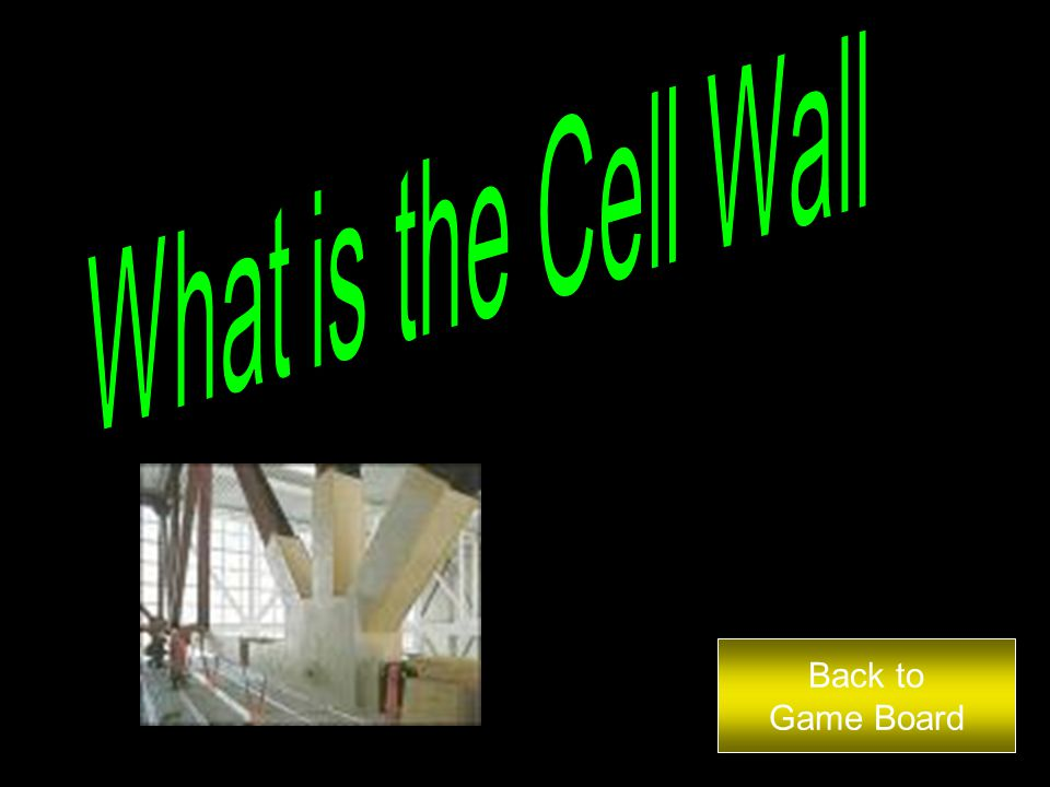 This part is only found in the plant cell and gives the cell structure and shape.