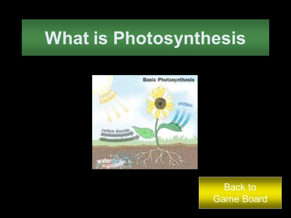 This is the process by which plant cells make their own food. Back to Game Board Answer
