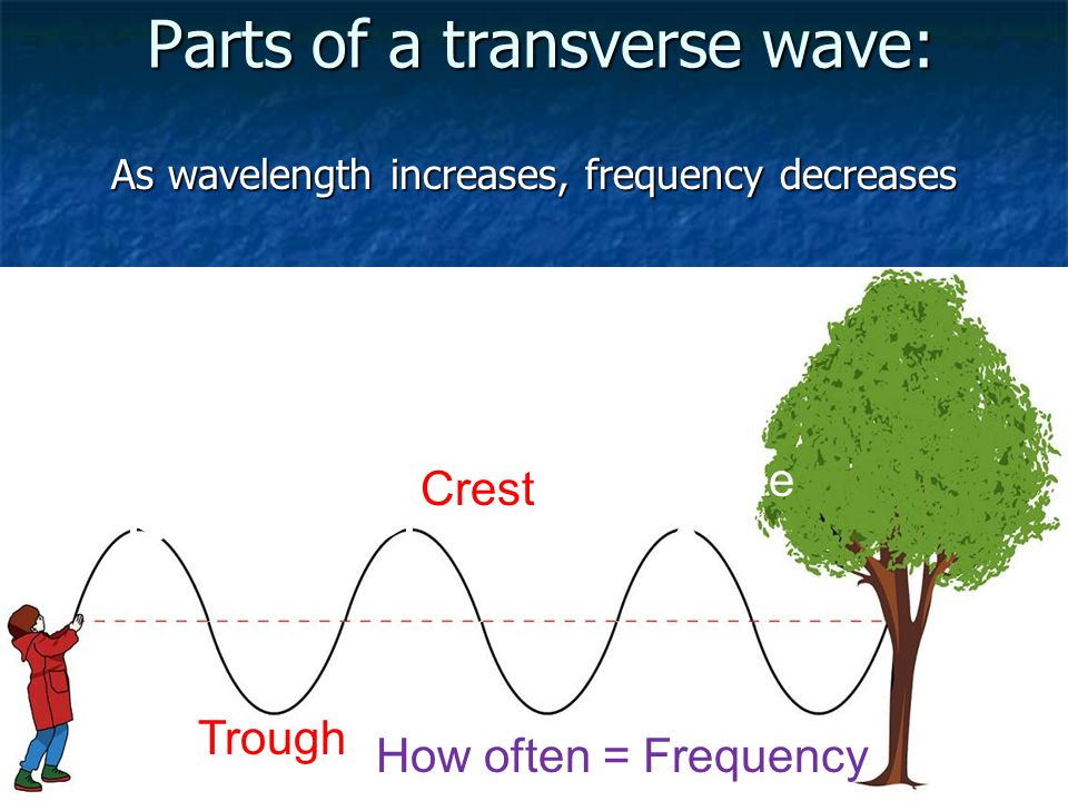 Compression Waves Compression waves move like a worm, squeezing and releasing Compression waves move like a worm, squeezing and releasing Sound energy moves in compression waves Sound energy moves in compression waves