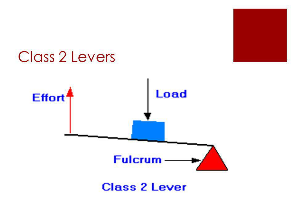 Class 2 Levers