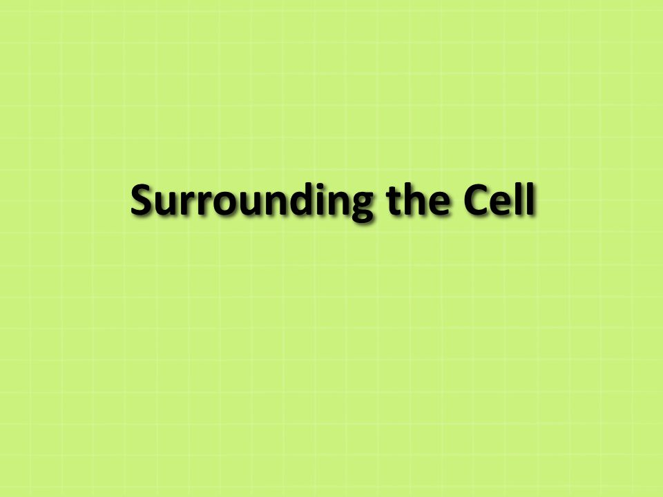 Cell Membrane Outer membrane of cell that controls movement in and out of the cell Double layer http://library.thinkquest.org/12413/structures.html