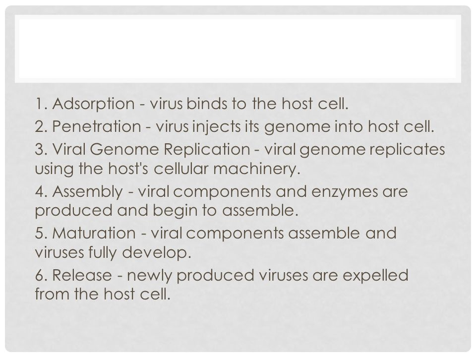 1. Adsorption - virus binds to the host cell. 2. Penetration - virus injects its genome into host cell. 3. Viral Genome Replication - viral genome rep