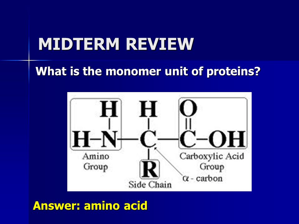 MIDTERM REVIEW What is the monomer unit of proteins Answer: amino acid