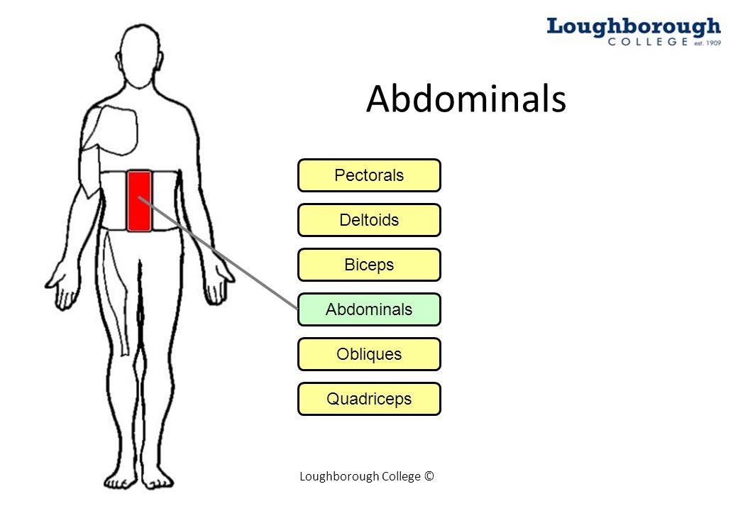 Loughborough College © Abdominals Pectorals Deltoids Biceps Abdominals Obliques Quadriceps