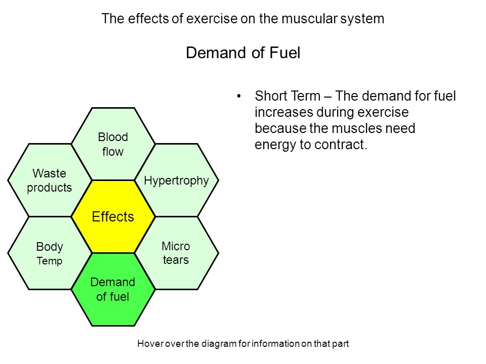 Hover over the diagram for information on that part Demand of Fuel Short Term – The demand for fuel increases during exercise because the muscles need energy to contract.