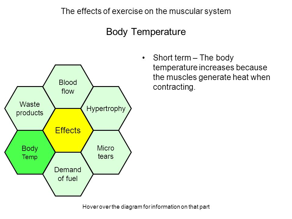 Hover over the diagram for information on that part Body Temperature Short term – The body temperature increases because the muscles generate heat when contracting.