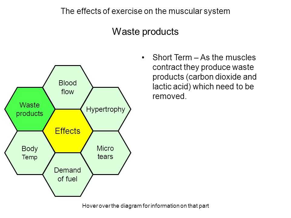 Hover over the diagram for information on that part Waste products Short Term – As the muscles contract they produce waste products (carbon dioxide and lactic acid) which need to be removed.