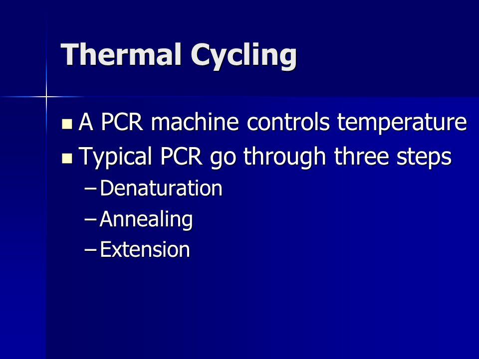 Thermal Cycling A PCR machine controls temperature A PCR machine controls temperature Typical PCR go through three steps Typical PCR go through three