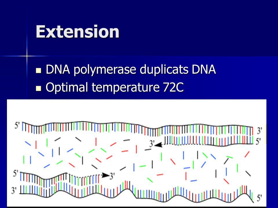 Extension DNA polymerase duplicats DNA DNA polymerase duplicats DNA Optimal temperature 72C Optimal temperature 72C