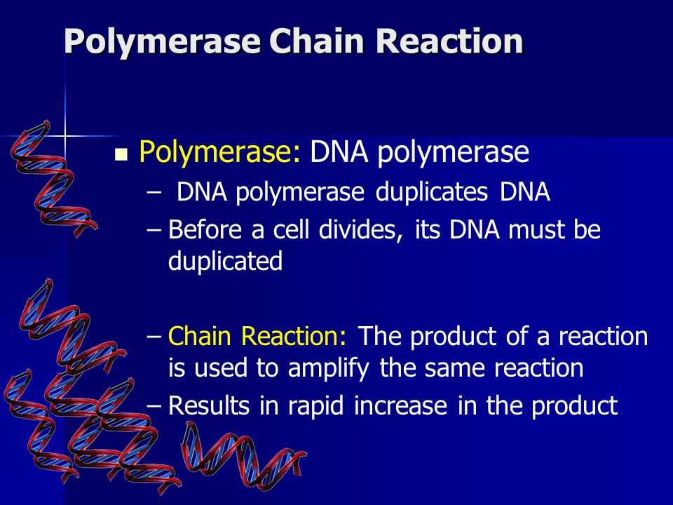 Polymerase Chain Reaction Polymerase: DNA polymerase – – DNA polymerase duplicates DNA – –Before a cell divides, its DNA must be duplicated – –Chain Reaction: The product of a reaction is used to amplify the same reaction – –Results in rapid increase in the product