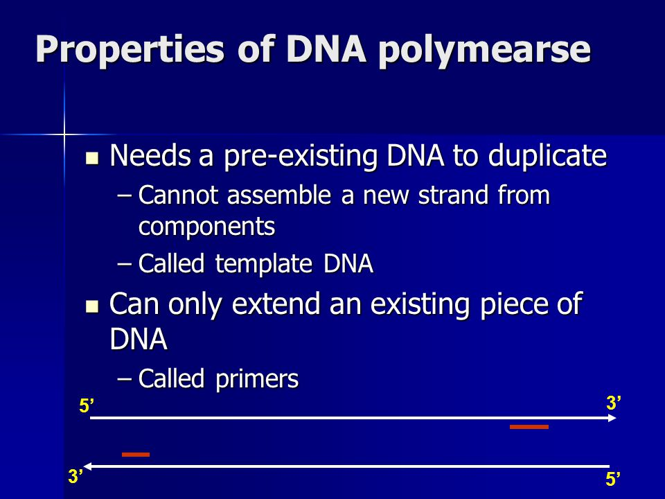 Properties of DNA polymearse 3' 5' 3' Needs a pre-existing DNA to duplicate Needs a pre-existing DNA to duplicate –Cannot assemble a new strand from c