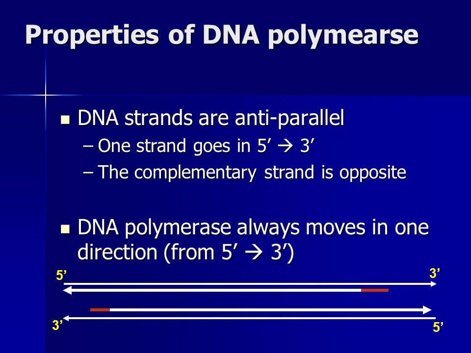 Properties of DNA polymearse DNA strands are anti-parallel DNA strands are anti-parallel –One strand goes in 5'  3' –The complementary strand is oppo