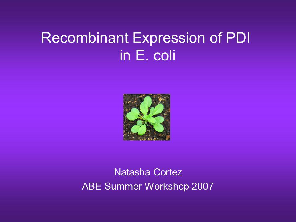 Recombinant Expression of PDI in E. coli Natasha Cortez ABE Summer Workshop 2007