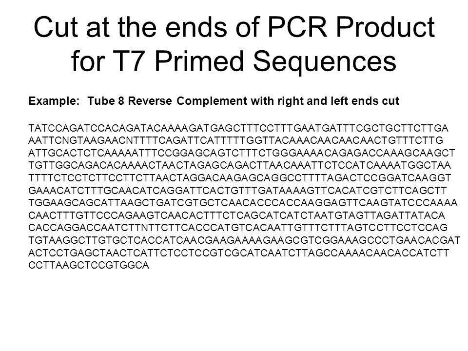 Cut at the ends of PCR Product for T7 Primed Sequences Example: Tube 8 Reverse Complement with right and left ends cut TATCCAGATCCACAGATACAAAAGATGAGCTTTCCTTTGAATGATTTCGCTGCTTCTTGA AATTCNGTAAGAACNTTTTCAGATTCATTTTTGGTTACAAACAACAACAACTGTTTCTTG ATTGCACTCTCAAAAATTTCCGGAGCAGTCTTTCTGGGAAAACAGAGACCAAAGCAAGCT TGTTGGCAGACACAAAACTAACTAGAGCAGACTTAACAAATTCTCCATCAAAATGGCTAA TTTTCTCCTCTTCCTTCTTAACTAGGACAAGAGCAGGCCTTTTAGACTCCGGATCAAGGT GAAACATCTTTGCAACATCAGGATTCACTGTTTGATAAAAGTTCACATCGTCTTCAGCTT TGGAAGCAGCATTAAGCTGATCGTGCTCAACACCCACCAAGGAGTTCAAGTATCCCAAAA CAACTTTGTTCCCAGAAGTCAACACTTTCTCAGCATCATCTAATGTAGTTAGATTATACA CACCAGGACCAATCTTNTTCTTCACCCATGTCACAATTGTTTCTTTAGTCCTTCCTCCAG TGTAAGGCTTGTGCTCACCATCAACGAAGAAAAGAAGCGTCGGAAAGCCCTGAACACGAT ACTCCTGAGCTAACTCATTCTCCTCCGTCGCATCAATCTTAGCCAAAACAACACCATCTT CCTTAAGCTCCGTGGCA