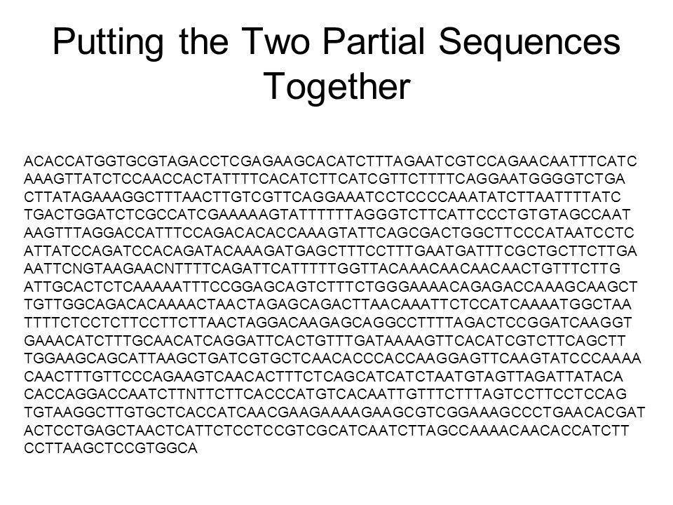 Putting the Two Partial Sequences Together ACACCATGGTGCGTAGACCTCGAGAAGCACATCTTTAGAATCGTCCAGAACAATTTCATC AAAGTTATCTCCAACCACTATTTTCACATCTTCATCGTTCTTTTCAGGAATGGGGTCTGA CTTATAGAAAGGCTTTAACTTGTCGTTCAGGAAATCCTCCCCAAATATCTTAATTTTATC TGACTGGATCTCGCCATCGAAAAAGTATTTTTTAGGGTCTTCATTCCCTGTGTAGCCAAT AAGTTTAGGACCATTTCCAGACACACCAAAGTATTCAGCGACTGGCTTCCCATAATCCTC ATTATCCAGATCCACAGATACAAAGATGAGCTTTCCTTTGAATGATTTCGCTGCTTCTTGA AATTCNGTAAGAACNTTTTCAGATTCATTTTTGGTTACAAACAACAACAACTGTTTCTTG ATTGCACTCTCAAAAATTTCCGGAGCAGTCTTTCTGGGAAAACAGAGACCAAAGCAAGCT TGTTGGCAGACACAAAACTAACTAGAGCAGACTTAACAAATTCTCCATCAAAATGGCTAA TTTTCTCCTCTTCCTTCTTAACTAGGACAAGAGCAGGCCTTTTAGACTCCGGATCAAGGT GAAACATCTTTGCAACATCAGGATTCACTGTTTGATAAAAGTTCACATCGTCTTCAGCTT TGGAAGCAGCATTAAGCTGATCGTGCTCAACACCCACCAAGGAGTTCAAGTATCCCAAAA CAACTTTGTTCCCAGAAGTCAACACTTTCTCAGCATCATCTAATGTAGTTAGATTATACA CACCAGGACCAATCTTNTTCTTCACCCATGTCACAATTGTTTCTTTAGTCCTTCCTCCAG TGTAAGGCTTGTGCTCACCATCAACGAAGAAAAGAAGCGTCGGAAAGCCCTGAACACGAT ACTCCTGAGCTAACTCATTCTCCTCCGTCGCATCAATCTTAGCCAAAACAACACCATCTT CCTTAAGCTCCGTGGCA