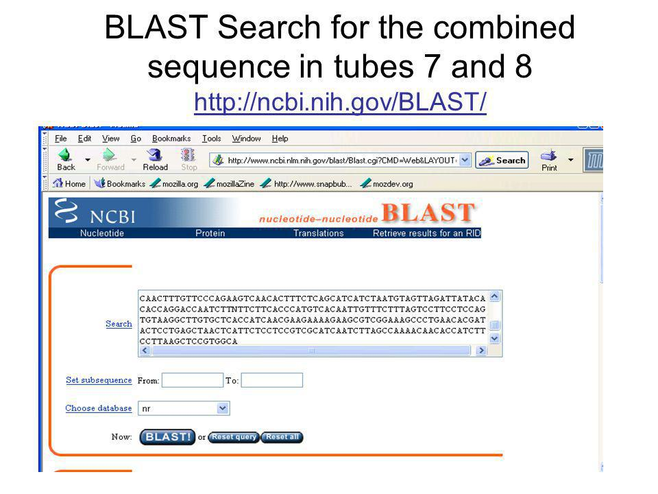 BLAST Search for the combined sequence in tubes 7 and 8 http://ncbi.nih.gov/BLAST/