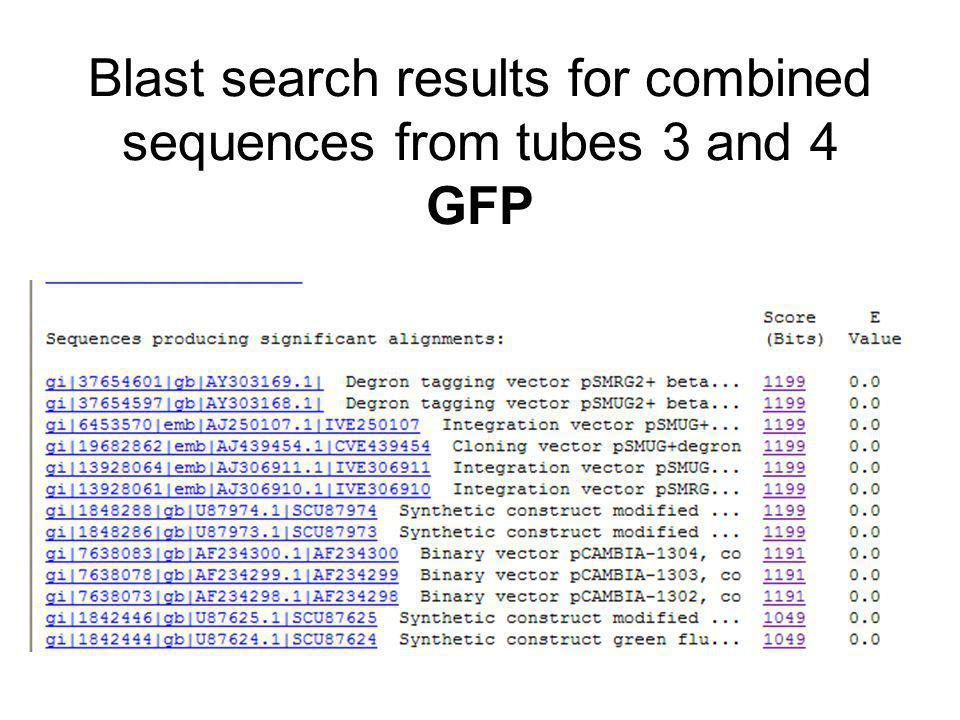 Blast search results for combined sequences from tubes 3 and 4 GFP