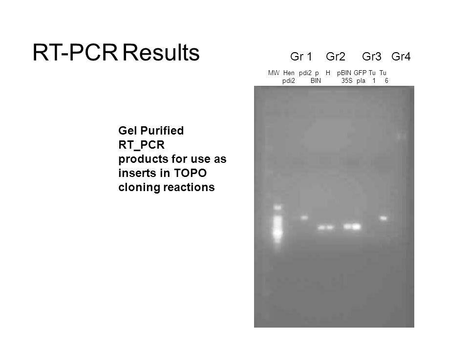 MW Hen pdi2 p H pBIN GFP Tu Tu pdi2 BIN 35S pla 1 6 Gr 1 Gr2 Gr3 Gr4 Gel Purified RT_PCR products for use as inserts in TOPO cloning reactions RT-PCR Results
