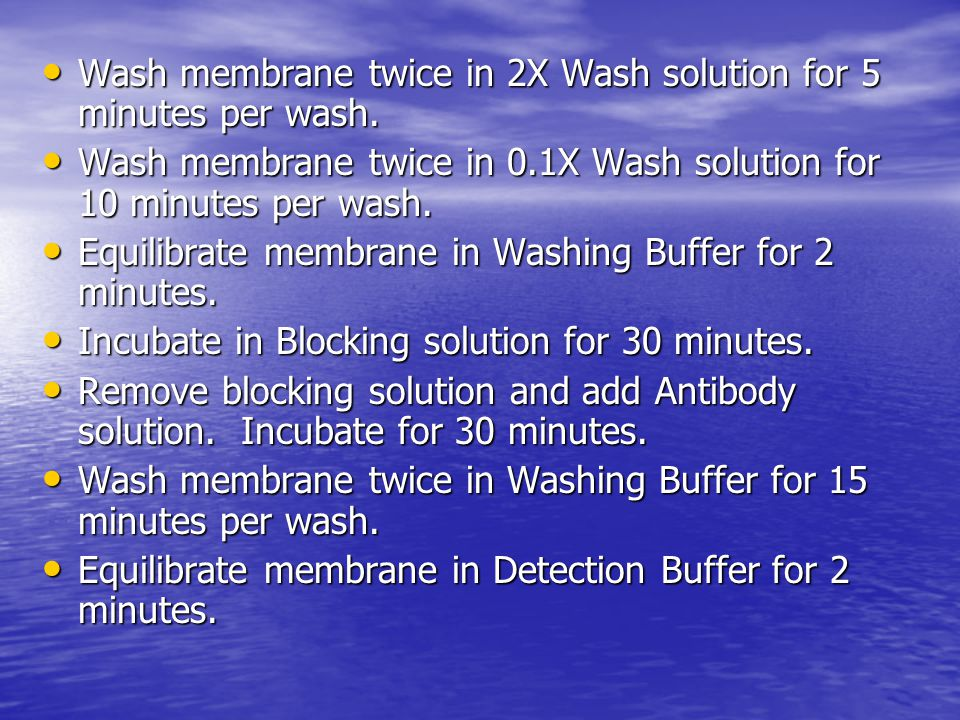Wash membrane twice in 2X Wash solution for 5 minutes per wash. Wash membrane twice in 2X Wash solution for 5 minutes per wash. Wash membrane twice in