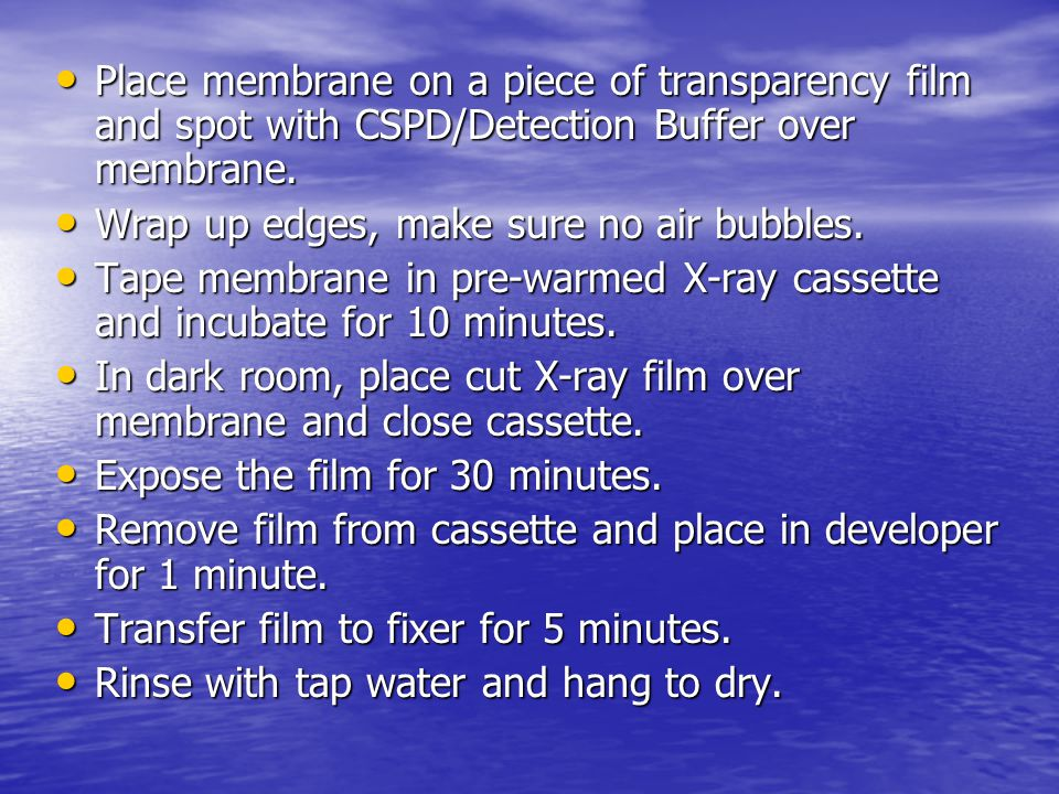 Place membrane on a piece of transparency film and spot with CSPD/Detection Buffer over membrane.