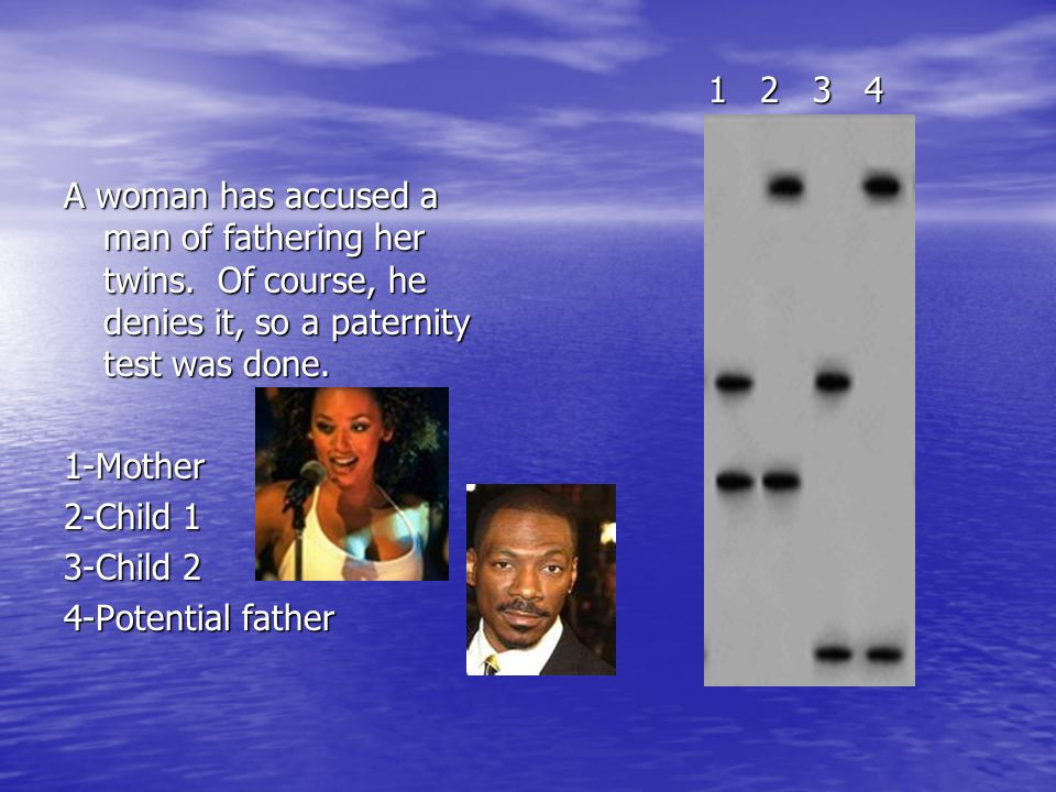 A woman has accused a man of fathering her twins. Of course, he denies it, so a paternity test was done. 1-Mother 2-Child 1 3-Child 2 4-Potential fath