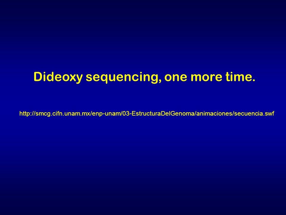 http://smcg.cifn.unam.mx/enp-unam/03-EstructuraDelGenoma/animaciones/secuencia.swf Dideoxy sequencing, one more time.