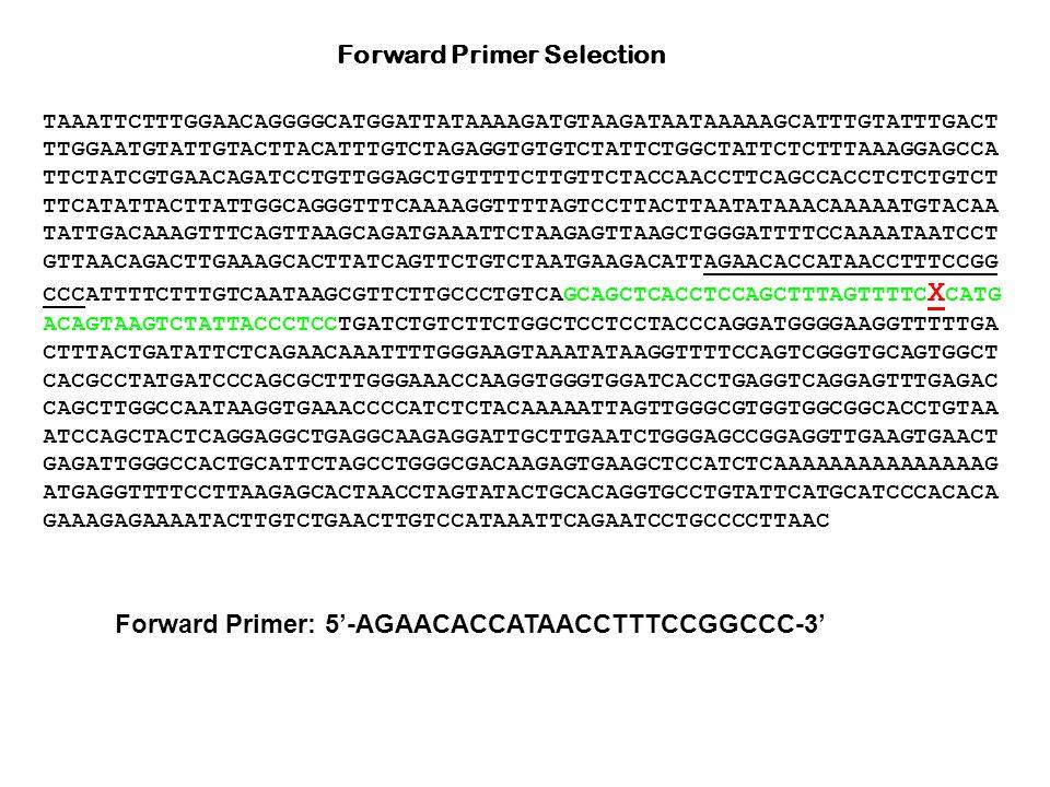 Forward Primer Selection TAAATTCTTTGGAACAGGGGCATGGATTATAAAAGATGTAAGATAATAAAAAGCATTTGTATTTGACT TTGGAATGTATTGTACTTACATTTGTCTAGAGGTGTGTCTATTCTGGCTATTCTCTTTAAAGGAGCCA TTCTATCGTGAACAGATCCTGTTGGAGCTGTTTTCTTGTTCTACCAACCTTCAGCCACCTCTCTGTCT TTCATATTACTTATTGGCAGGGTTTCAAAAGGTTTTAGTCCTTACTTAATATAAACAAAAATGTACAA TATTGACAAAGTTTCAGTTAAGCAGATGAAATTCTAAGAGTTAAGCTGGGATTTTCCAAAATAATCCT GTTAACAGACTTGAAAGCACTTATCAGTTCTGTCTAATGAAGACATTAGAACACCATAACCTTTCCGG CCCATTTTCTTTGTCAATAAGCGTTCTTGCCCTGTCAGCAGCTCACCTCCAGCTTTAGTTTTC X CATG ACAGTAAGTCTATTACCCTCCTGATCTGTCTTCTGGCTCCTCCTACCCAGGATGGGGAAGGTTTTTGA CTTTACTGATATTCTCAGAACAAATTTTGGGAAGTAAATATAAGGTTTTCCAGTCGGGTGCAGTGGCT CACGCCTATGATCCCAGCGCTTTGGGAAACCAAGGTGGGTGGATCACCTGAGGTCAGGAGTTTGAGAC CAGCTTGGCCAATAAGGTGAAACCCCATCTCTACAAAAATTAGTTGGGCGTGGTGGCGGCACCTGTAA ATCCAGCTACTCAGGAGGCTGAGGCAAGAGGATTGCTTGAATCTGGGAGCCGGAGGTTGAAGTGAACT GAGATTGGGCCACTGCATTCTAGCCTGGGCGACAAGAGTGAAGCTCCATCTCAAAAAAAAAAAAAAAG ATGAGGTTTTCCTTAAGAGCACTAACCTAGTATACTGCACAGGTGCCTGTATTCATGCATCCCACACA GAAAGAGAAAATACTTGTCTGAACTTGTCCATAAATTCAGAATCCTGCCCCTTAAC Forward Primer: 5'-AGAACACCATAACCTTTCCGGCCC-3'