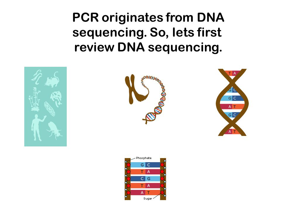 PCR originates from DNA sequencing. So, lets first review DNA sequencing.